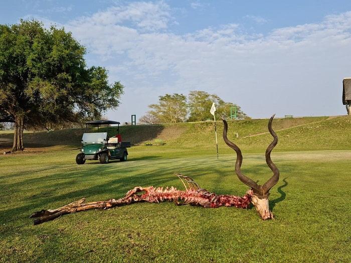 lỗ golf dị nhất thế giới động vật hoang dã đi dạo