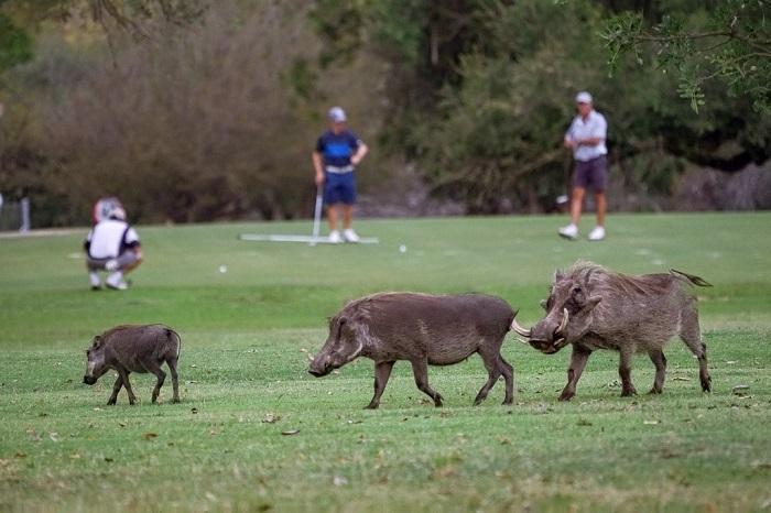lỗ golf dị nhất thế giới tên là Extremely 19th